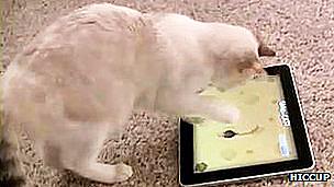 Gato jugando con una pantalla táctil