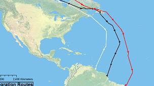 Ruta migratoria de los zarapitos trinadores Imagen gentileza Fletcher Smith