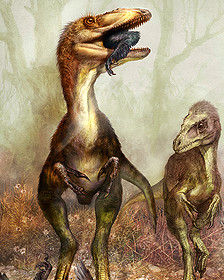 Sinocalliopteryx cazando un Sinornithosaurus Cheung Chungtat