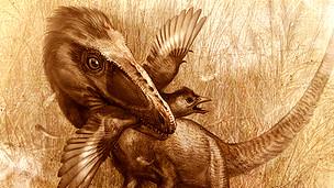Sinocalliopteryx cazando un Confuciusornis, un ave primitiva