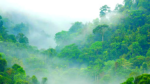 Bosque tropical Foto: © Smithore / Fotolia