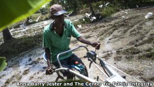 Cultivador de arroz em Padaviya, Sri Lanka, país afetado pela doença renal crônica