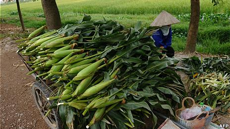 Một nông dân ngồi bán ngô mới thu hoạch ở ngoại ô Hà Nội hồi tháng 9/2012