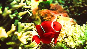 Peces en el Arrecife de la Gran Barrera Foto: SPL