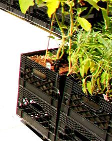 Cajas de plástico utilizadas para plantar verduras