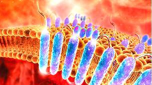 Receptores acoplados a proteínas G Imagen SPL