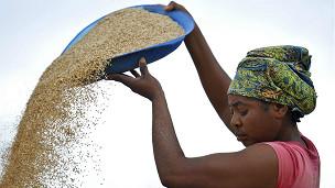 certains aliments  comme le manioc ont vu leurs prix grimper de 150%