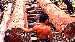 Hombres talando madera