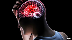 Cérebro / SPL