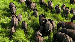 Elefantes en el Parque Nacional Garamba