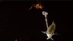 دراسة علمية: سمكة آرتشر تستخدم الخواص الفيزيائية للماء في الصيد