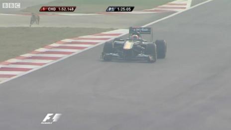 Perros callejeros en la F1