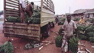 Carregadores de banana em Uganda (BBC)