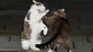 Mèo của Thủ tướng Anh và của Bộ trưởng Tài chính Anh ẩu đả