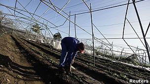 Trabajador supervisa daños en una plantación cerca de Santiago de Cuba