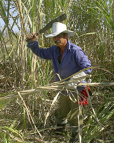 Capitalismo en Cuba, privatizaciones, economía estatal, inversiones de capital internacional. - Página 2 121110145838_cuba3_224x280_bbc_nocredit