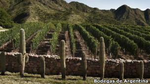 Vinícola / Bodegas de Argentina