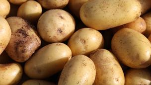 البطاطا،اختبار،الانترنت،واي فاي