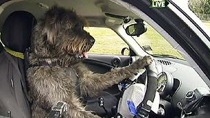 Brincadeira visa popularizar a adoção de cães abandonados (BBC)