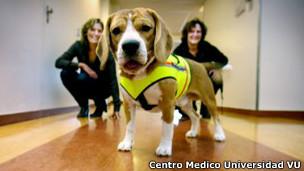 Cliff, el perro médico