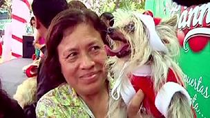 Cães e donos ganharam prêmios pelas melhores fantasias (BBC)