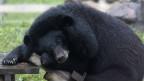 Trung tâm cứu hộ gấu Việt Nam ở Tam Đảo