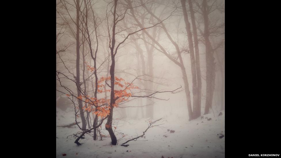 (Foto: Daniel Korzhonov)