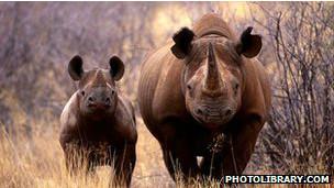 Una base de datos con ADN de los cuernos de un rinoceronte