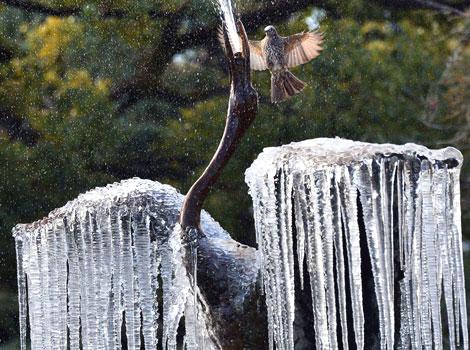 Frozen crane sculpture in Tokyo