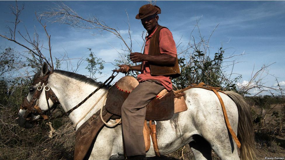 Raimundo, sertanejo afetado pela seca tocando seu gado no sertão em Iaçu. Foto: Flavio Forner