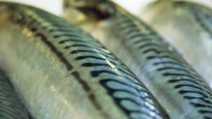 研究:吃高油脂海鱼 类风湿关节炎减半 - 雪山 - .