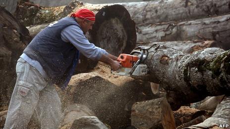 Tala de árboles en Grecia
