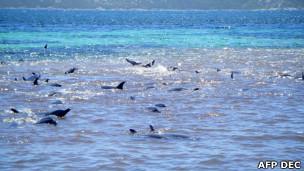 Grupo de delfines en alta mar