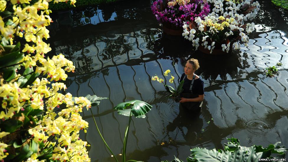 Jardim Botânico Kew, em Londres, para um festival anual de orquídeas