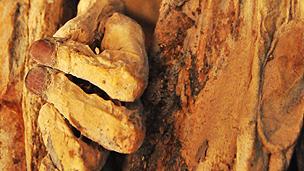 Momia en Quillagua. Foto cortesía: Paola Úrzua