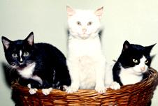 Three cats, BBC image