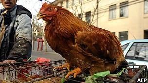 上海某路边摊贩在售卖的鸡(资料图片)