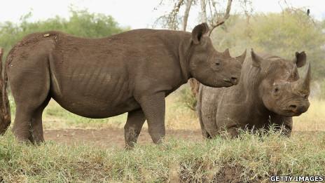 Tê giác ở Tanzania