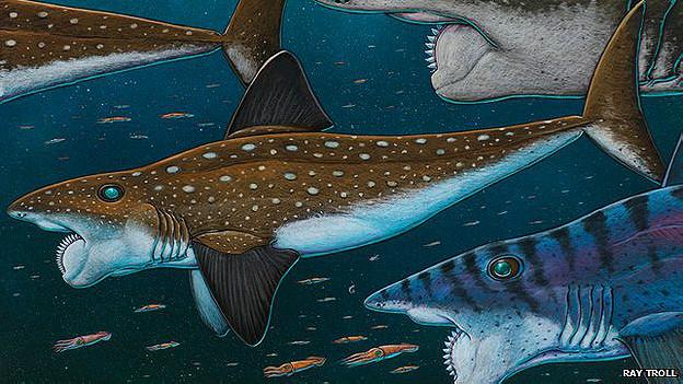 Dibujo del pez con dentadura de espiral