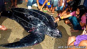 Tortuga laúd rodeada de niños antes de ser liberada al mar
