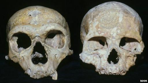 130313110211_skulls_512x288_nhm.jpg