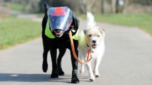 Perro ciego y su guia