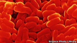 Bacteria de la tuberculosis