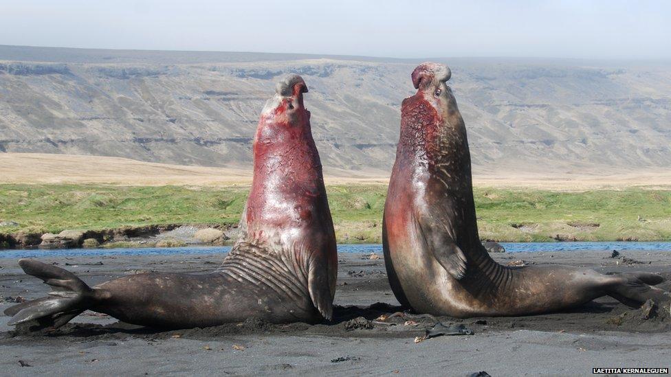 A publicação científica BMC Ecology premia melhores fotos de ecologia.