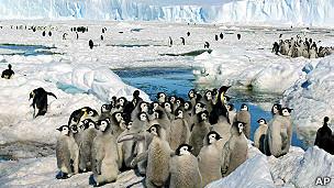 pingüino emperador en la Antártica