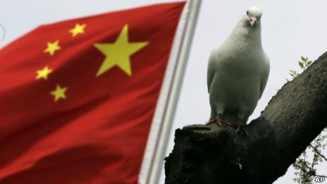上海一家公园内的鸽子