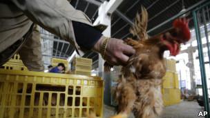 上海家禽市场