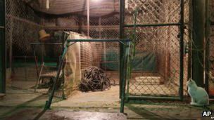 上海活禽市场关闭