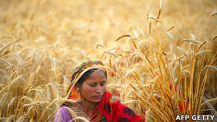 Mujer cosechando trigo