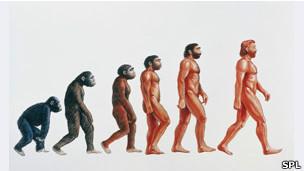 Gráfico de la evolución del Homo sapiens